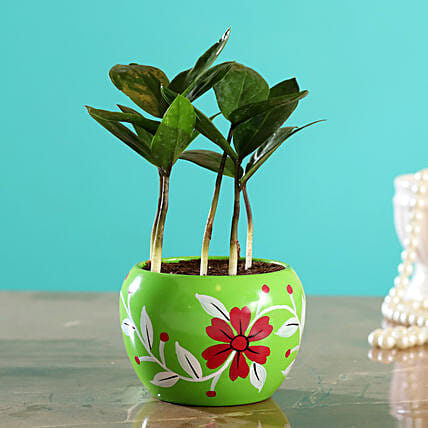 Zamia Plant In Green Hand Painted Pot