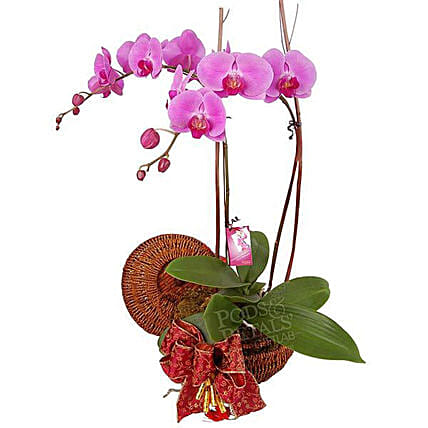 Orchid Bloom:Plant Delivery in Malaysia
