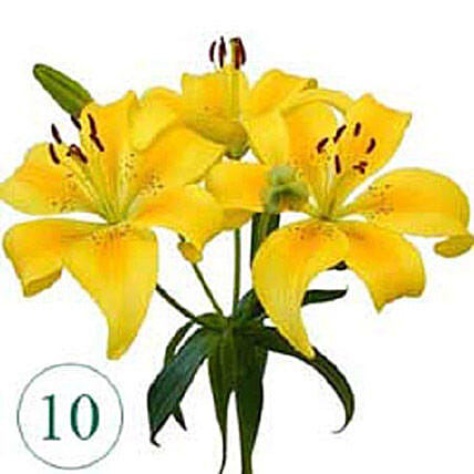 10 Blooms of Yellow Lilies OM