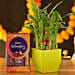 Lucky Bamboo Green Pot & Cadbury Celebrations