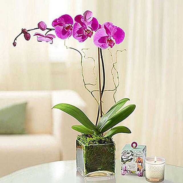 Purple Orchid Plant In Glass Vase:Send Plants to Saudi Arabia