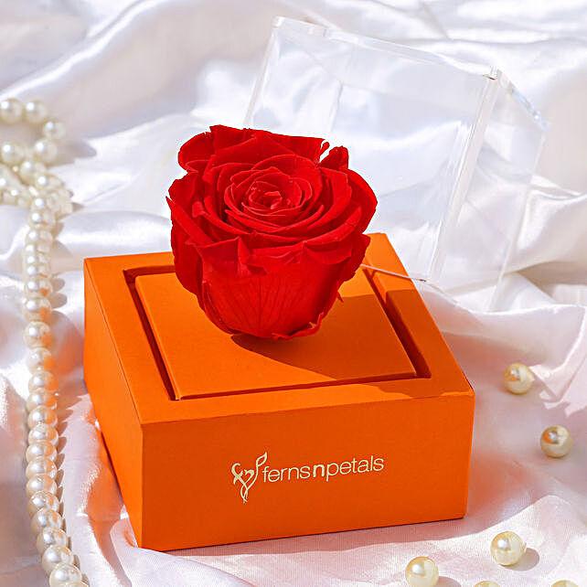 red forever rose in orange box online