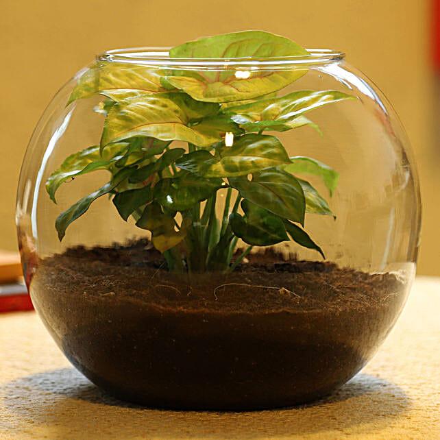 Syngonium Plant Glass Vase