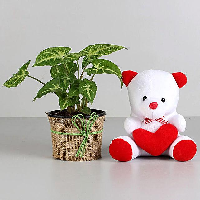 Syngonium Plant Lovely Combo