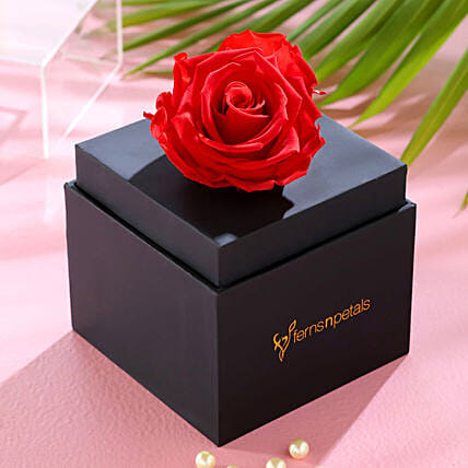 Single Forever Red Rose With Black Box for Valentines