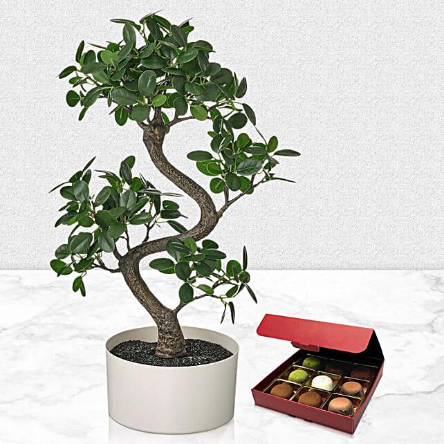 Beautiful Bonsai Plant with No Sugar Chocolate