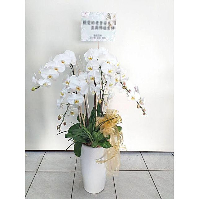Serene White Phalaenopsis Pot Arrangement