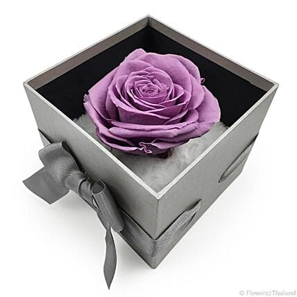 Enchanted Evening Forever Purple Rose
