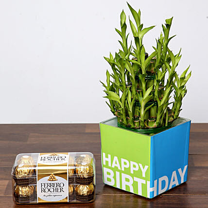 3 Layer Bamboo Plant and Chocolates For Birthday