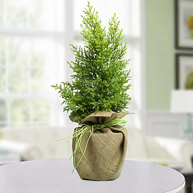 Christmas Trees In Uae Gift Christmas Trees Ferns N Petals