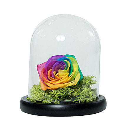 Splendid Rainbow Rose
