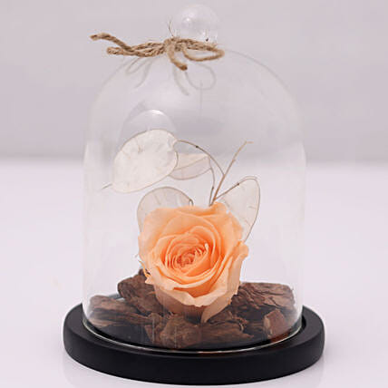 Peach Forever Rose In Glass Dome