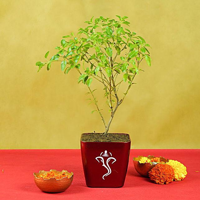 Tulsi Plant in Ganesha Planter