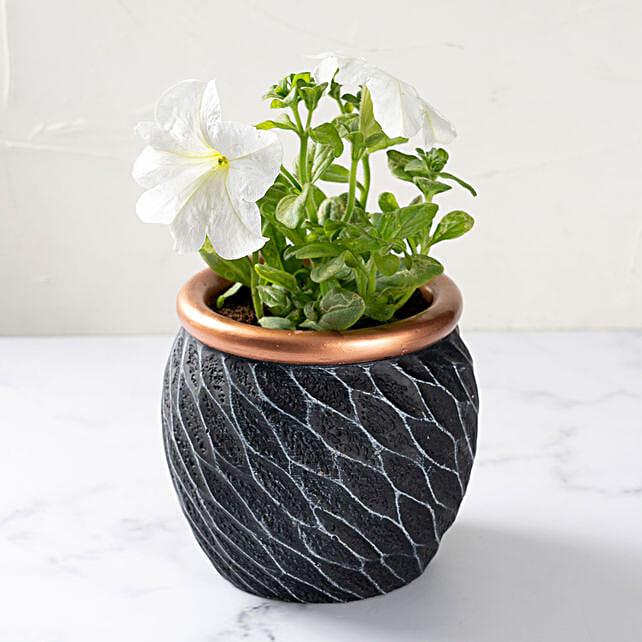 White Petunia in Decorative Pot