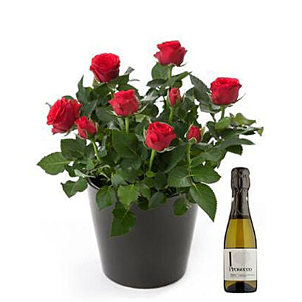 Rose Plant And Wine Bottle Combo