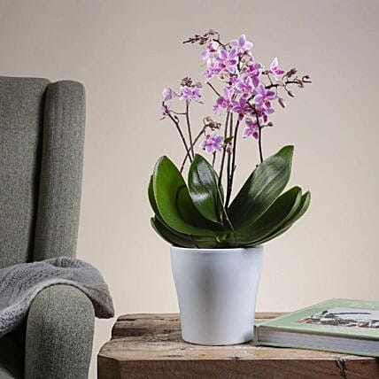 Wild Pink Orchid Plant