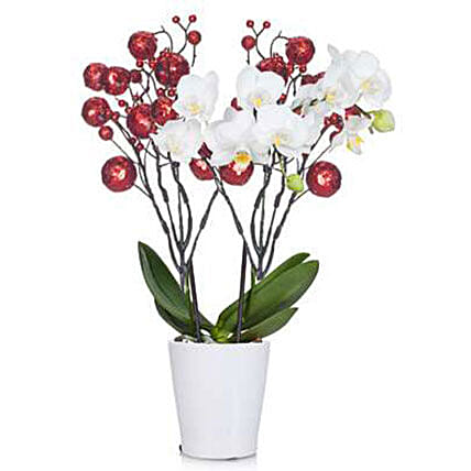 Berry Merry Orchid