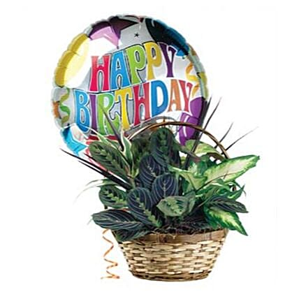 Birthday Greetings Dish Garden