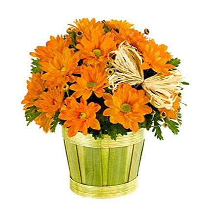 Exotic Thanksgiving Mum Plant:Send Thanks Giving Gifts to USA