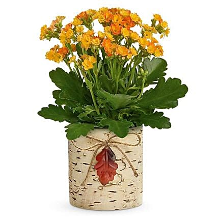 Festive Autumn Kalanchoe Thanksgiving Basket:Send Thanks Giving Gifts to USA