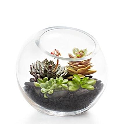 Loving Nature Succulent Terrarium