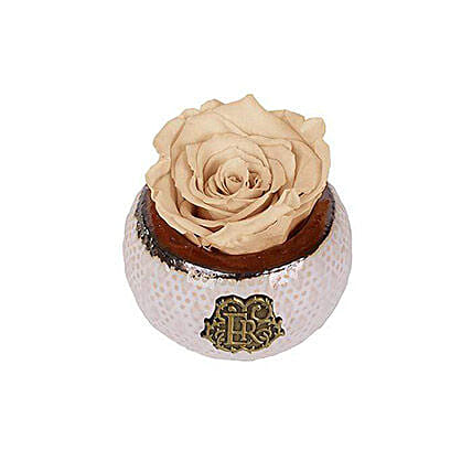 Mini Soho Eternal Luxury Rose