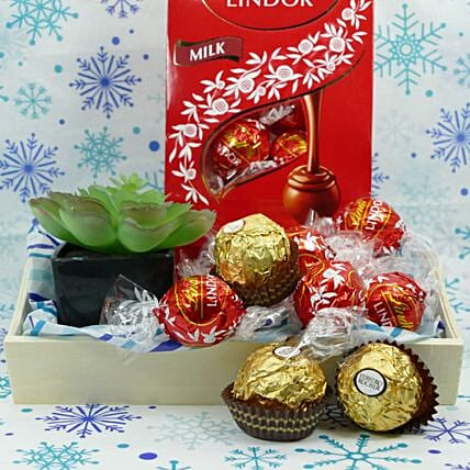 New Year Chocolate And Plant Gift:Plant Delivery in USA