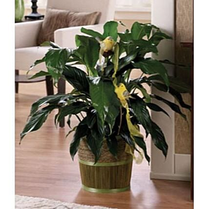 Peace Lily Plant With Resin Birds