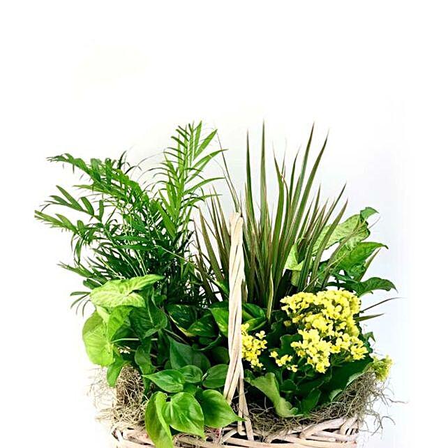 Dish Garden In Woven Basket