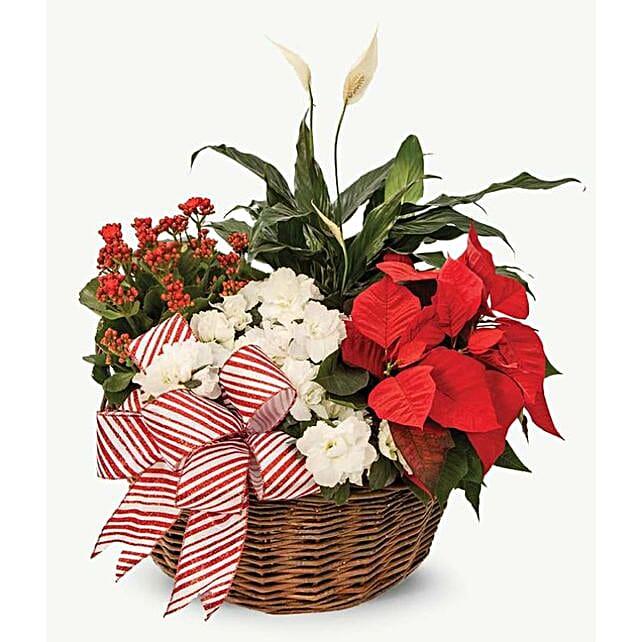 Vibrant Christmas Floral Magic